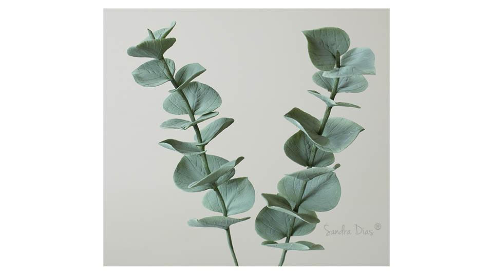 Eucaliptus de Açúcar